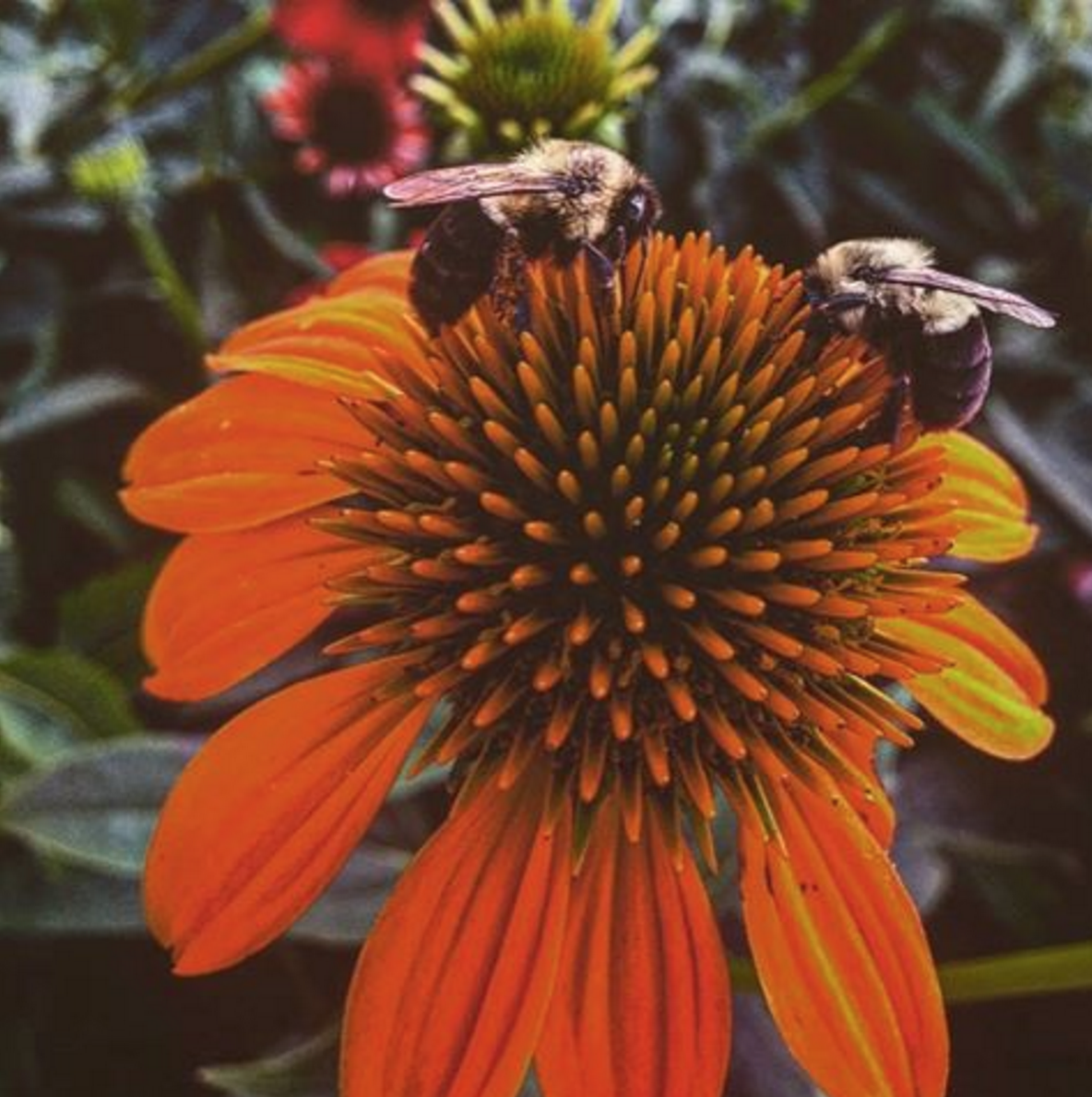 Aliana Grace Bailey Flowers nature photography 2.png