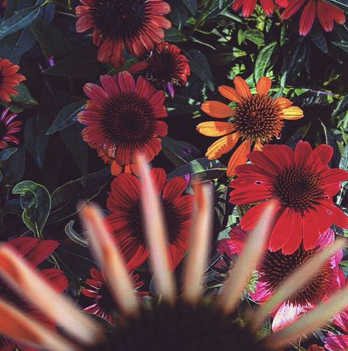 Aliana Grace Bailey Flowers nature photography.png