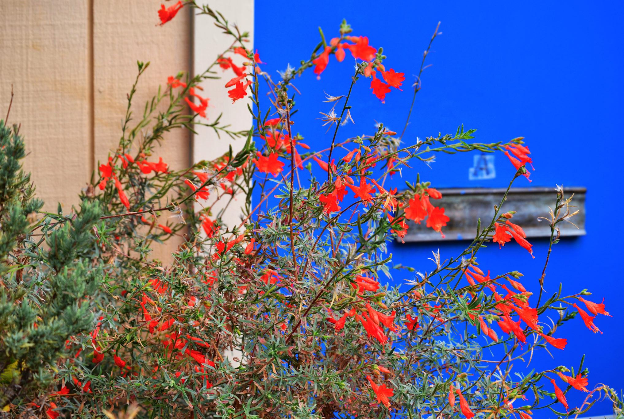 Aliana Grace Bailey San Francisco California Houses Flowers.png