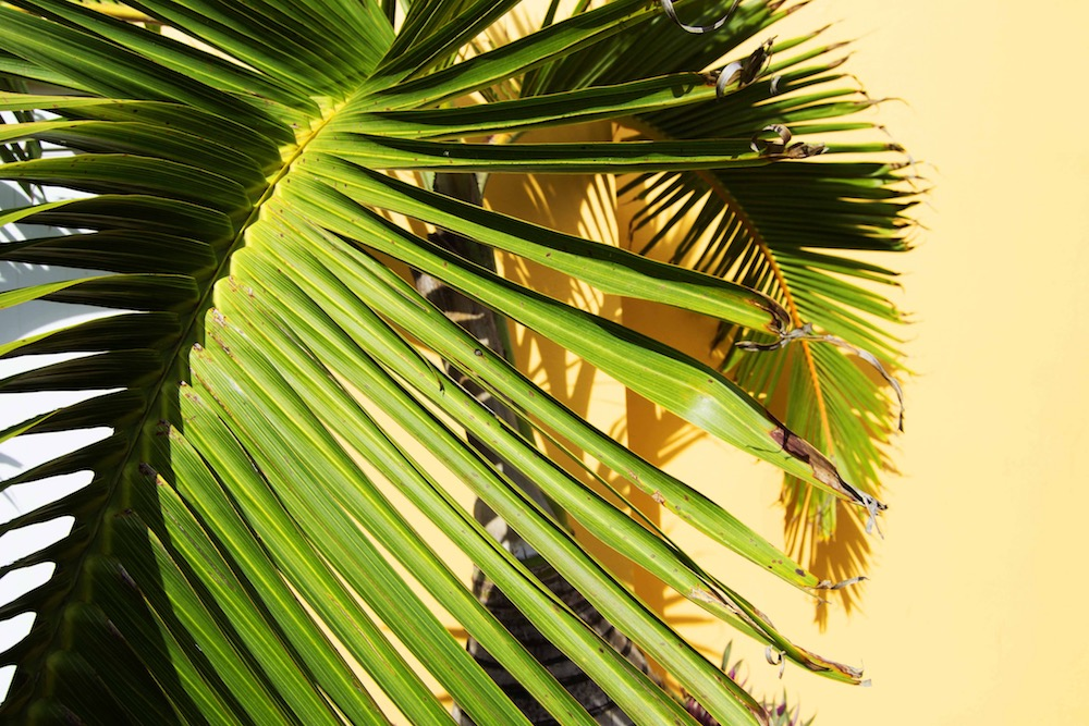 aliana grace bailey puerto rico 10.jpg