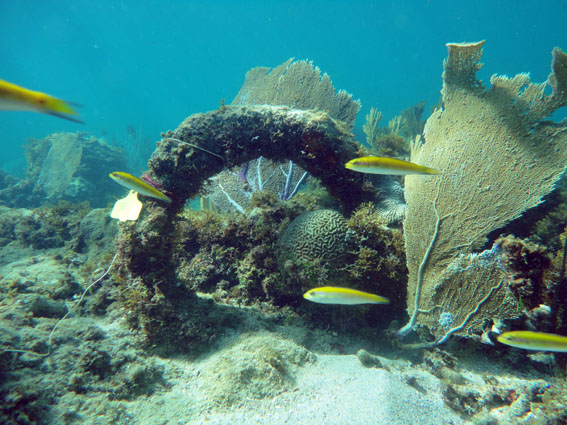 One of the anchors on the Island Wreck in Monte Cristi Bay