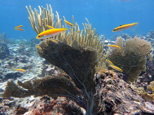 Some of the marine life at the top of the reef.