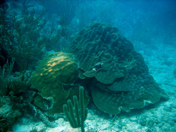 Coral life at the base of the reef