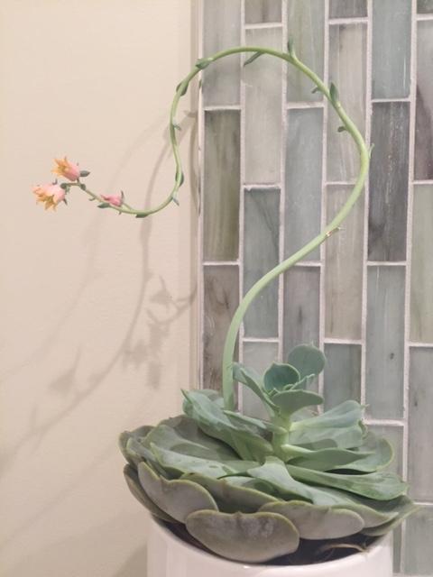 Interior Design Leslie Price Lafayette CA