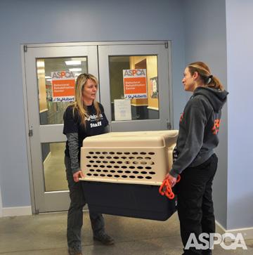Kaya and Robin were transferred to the ASPCA Behavioral Rehabilitation Center at St. Hubert's on February 23. Photo: ASPCA