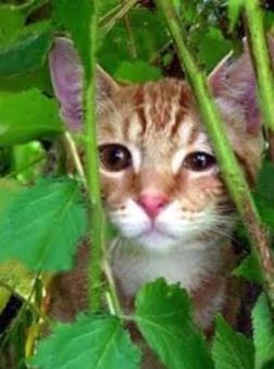 Spay/Neuter Community Cat