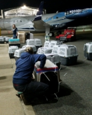 Pets arriving in carriers from flight