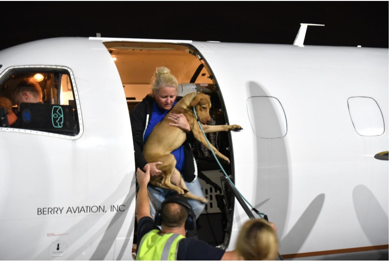 Dog Coming Off Plane.jpg