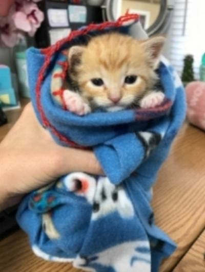 orange kitten burrito.jpg