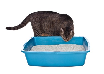 Basic Setup - Litter box is large and open.Litter is soft, unscented, and scoopable.Litter box is easily accessible.Litter is scooped twice a day.