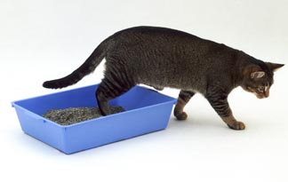 One Size Does Not Fit All - What once met the needs of your kitten will be too small for your adult cat.
