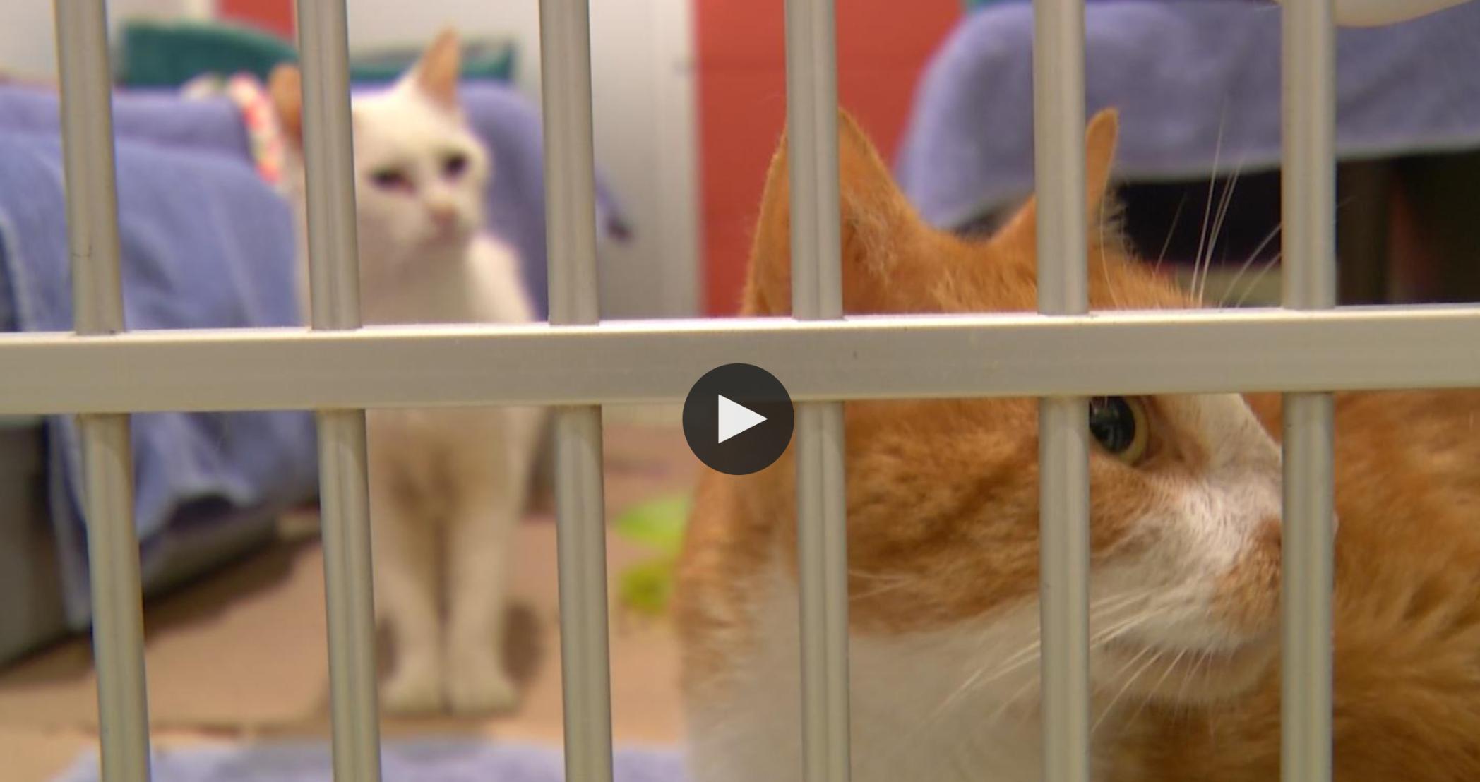 Watch NJTV's Coverage -