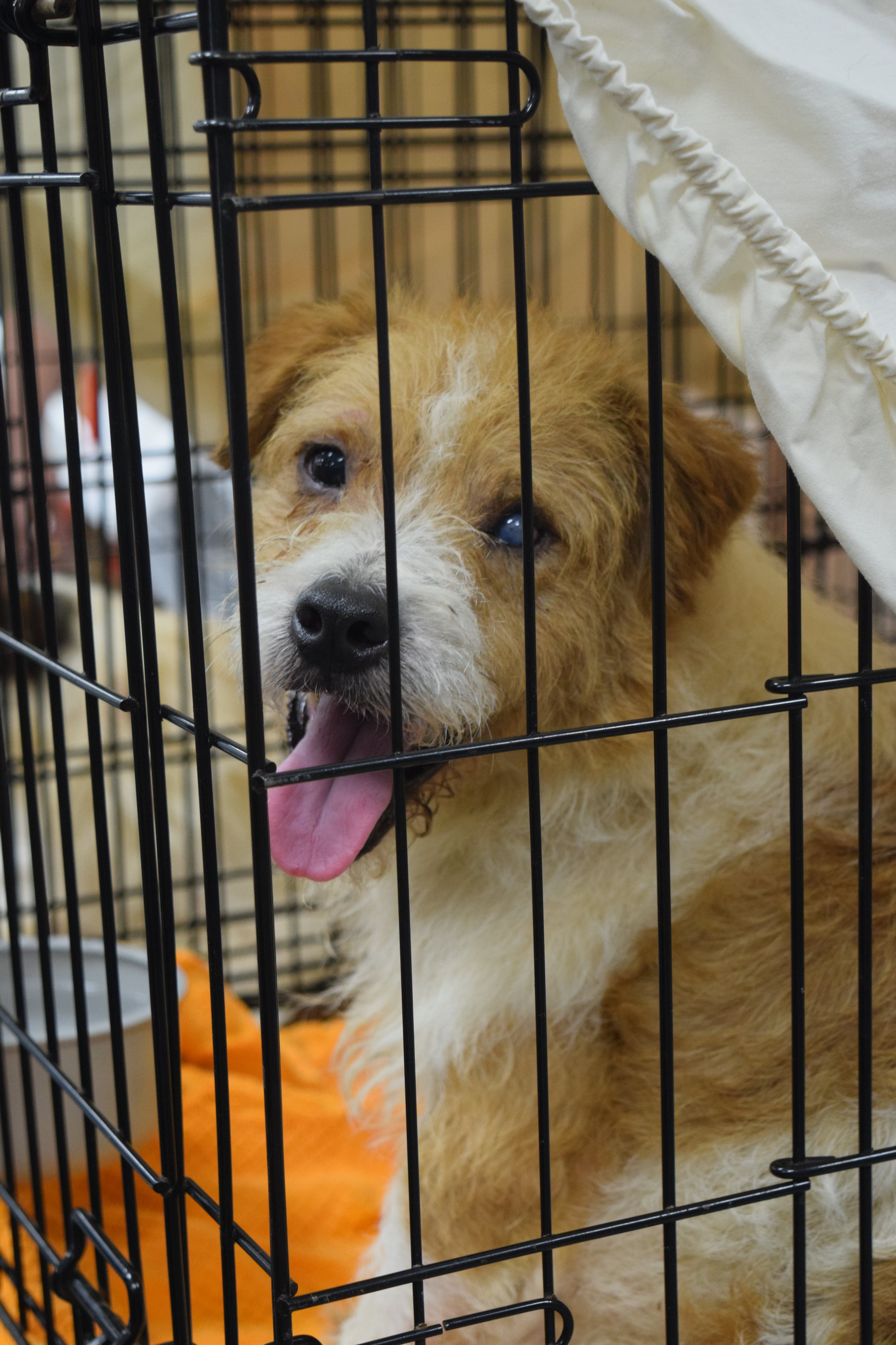 Latest News — St  Hubert's Animal Welfare Center