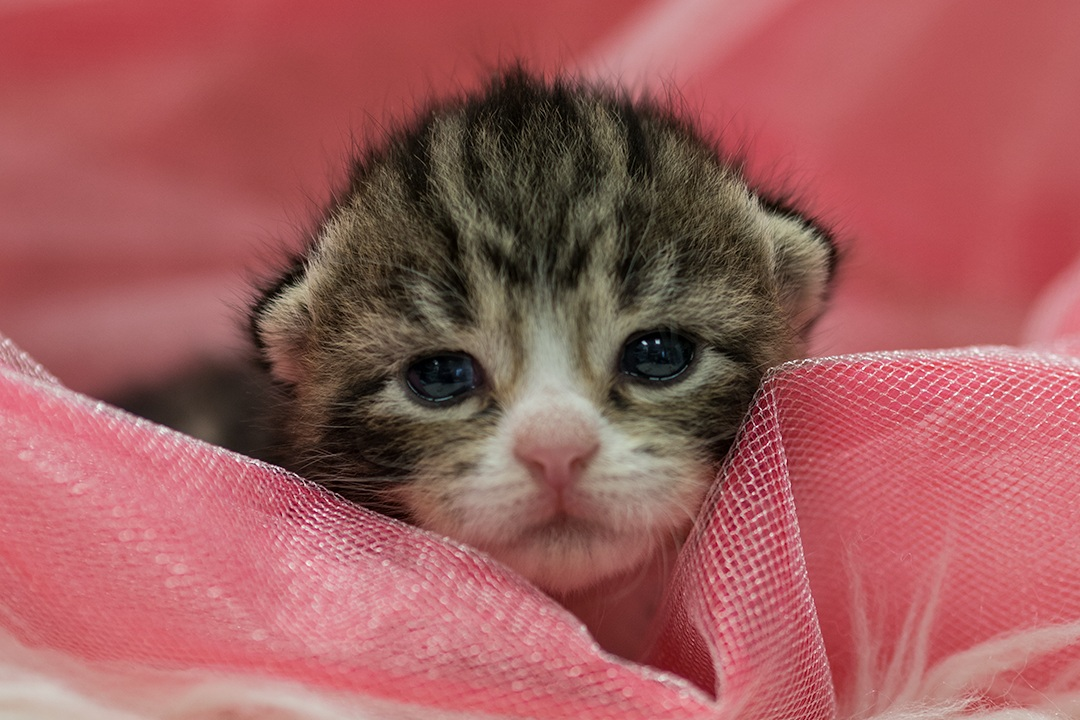 Kitten+8.jpg