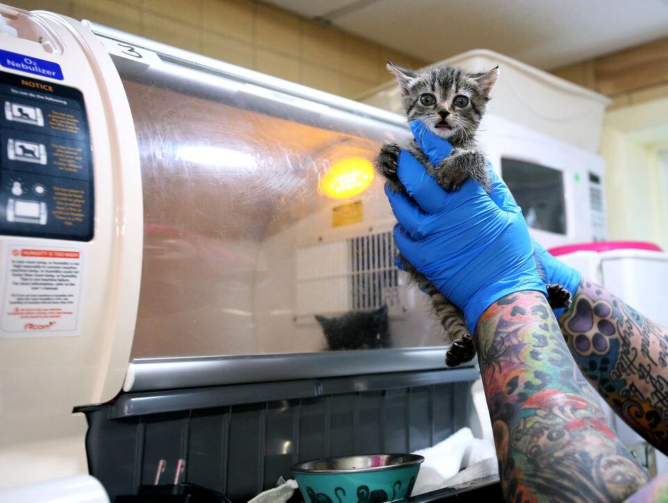 Fudge is taken out of the incubator for a bottle feeding by Sam Friedman, Monday, Sept. 30, 2019. (Lori M. Nichols | NJ Advance Media for NJ.com)