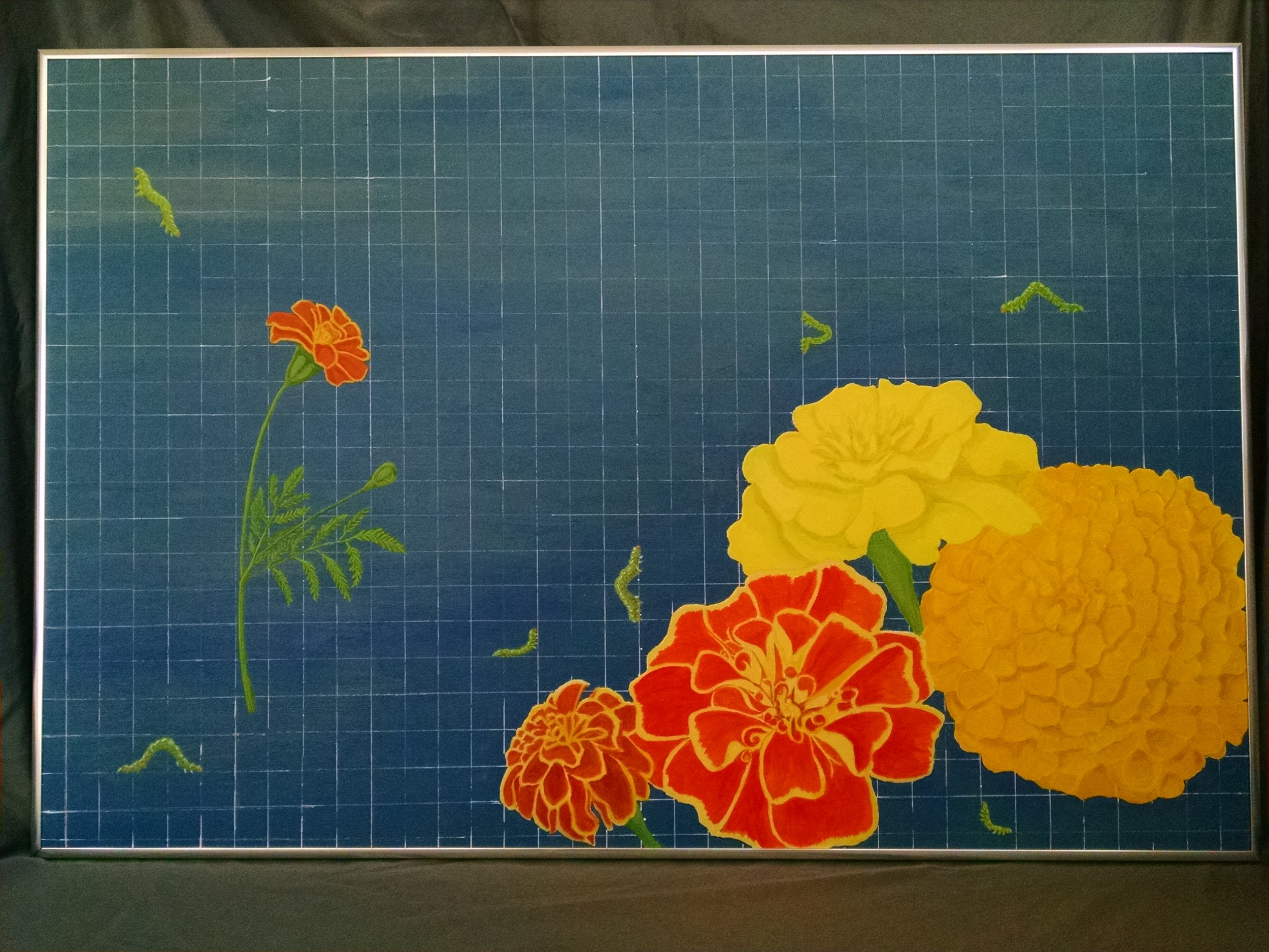 Measuring the Marigolds