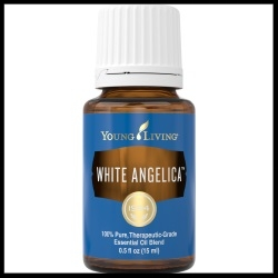 White Angelica Young Living Oil