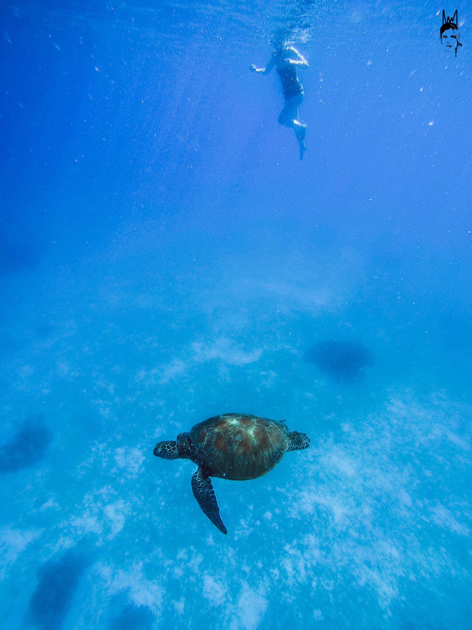 Turtle in Bohol