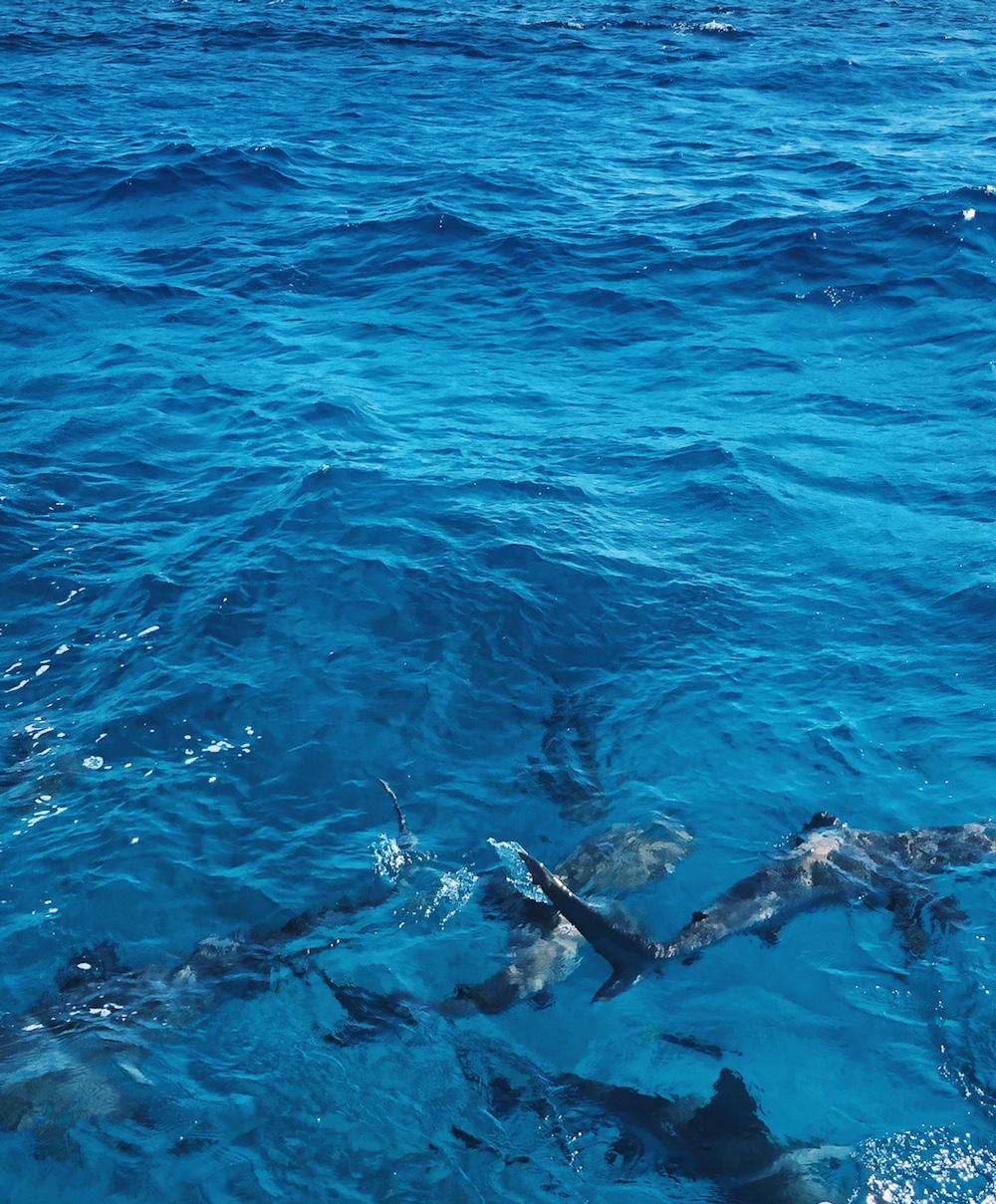 Stuart Cove snorkel excursion Bahamas reef sharks