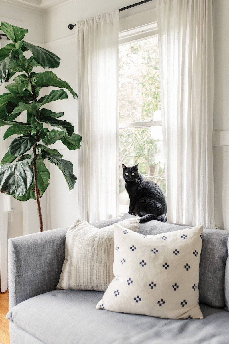 Harlowe & James Home Tour - Cat-Friendly Living Room