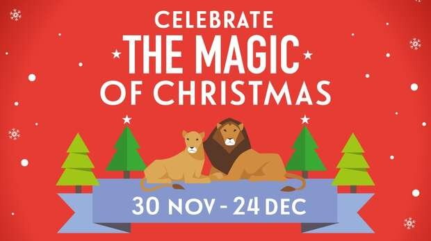 Ivisit The Magic Of Christmas At Zsl London Zoo Ivisit