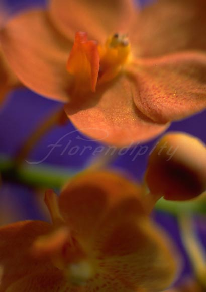 orange_flower_P05.jpg