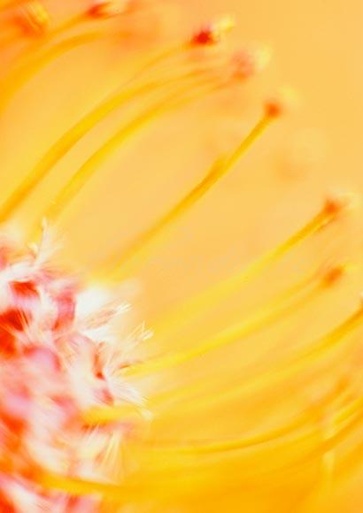 yellow_flower_P09.jpg