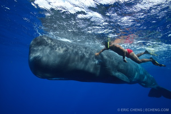 An intimate moment between a man and a sperm whale