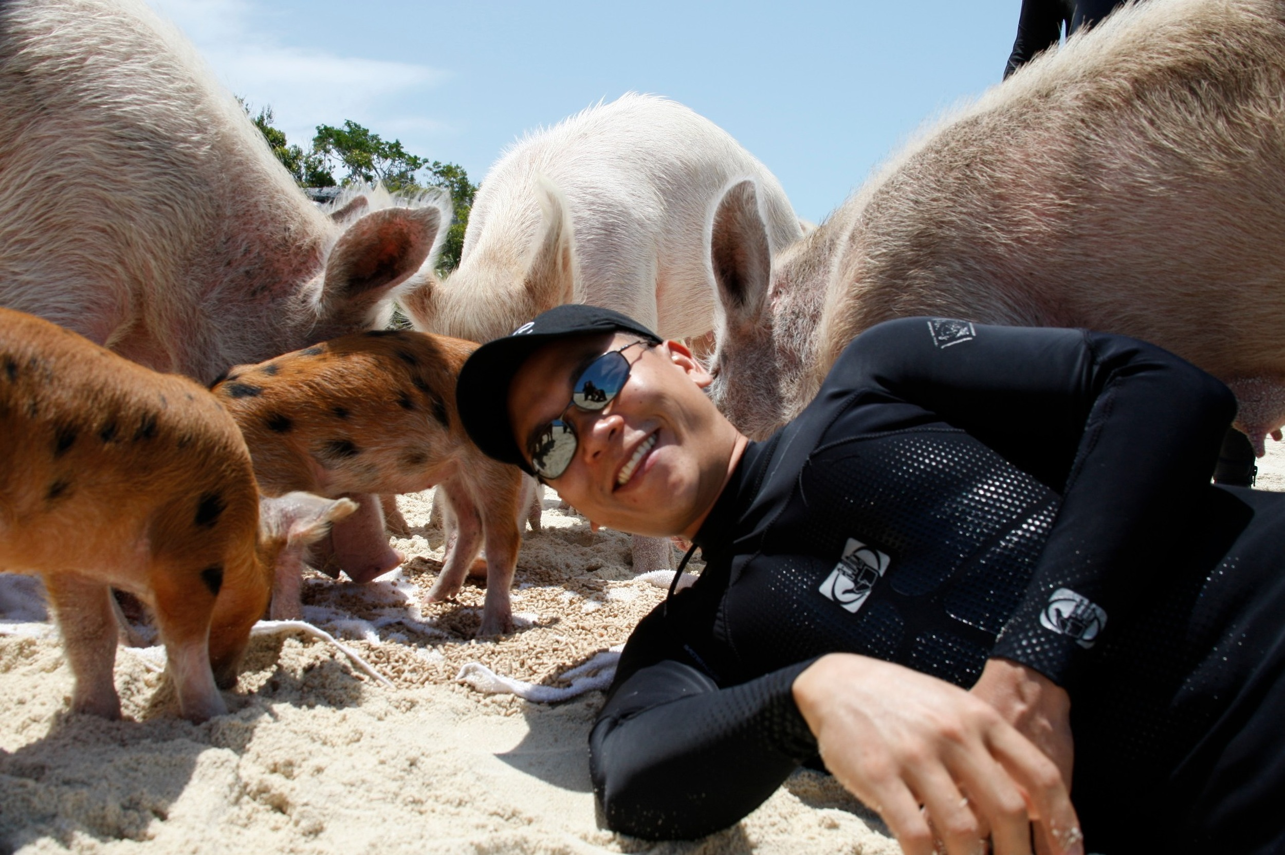 With the pigs of Big Major Cay, Bahamas