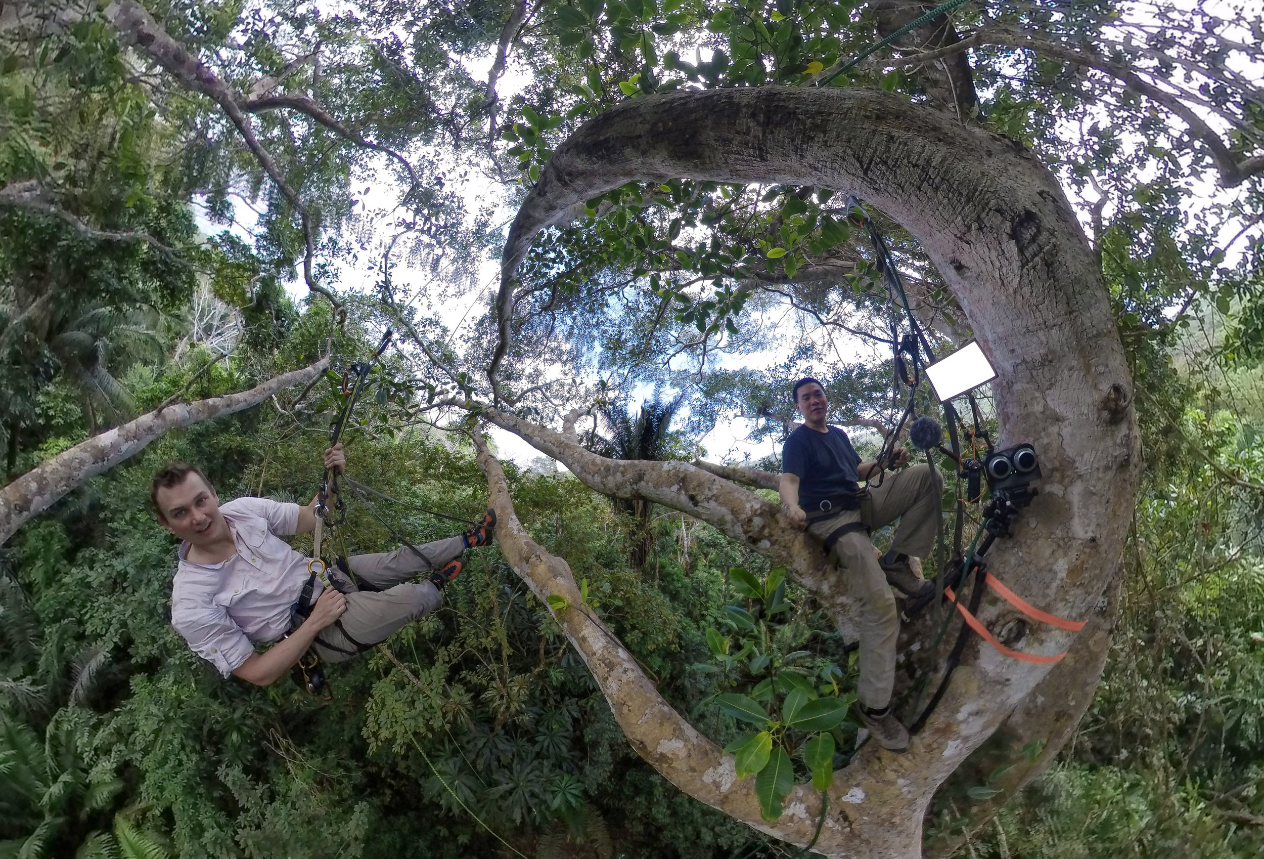 Hanging out nearly 100' high in a fig tree with Dr. Bryson Voirin