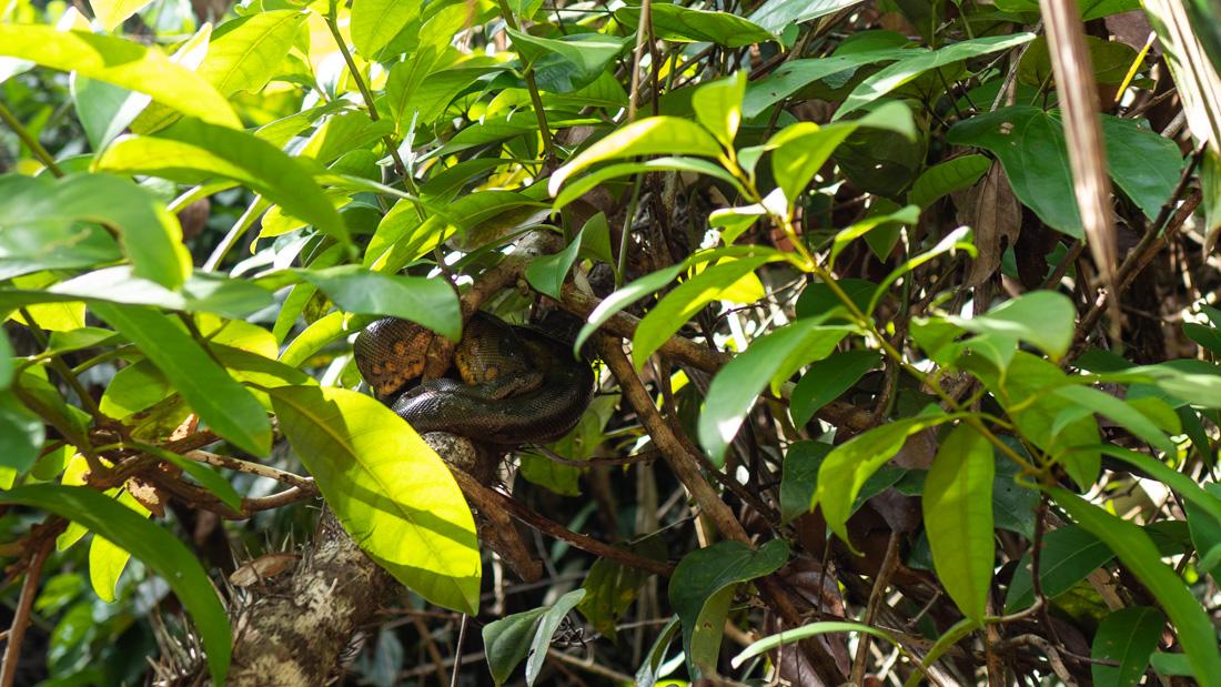 pacaya-samiria-snake.jpg