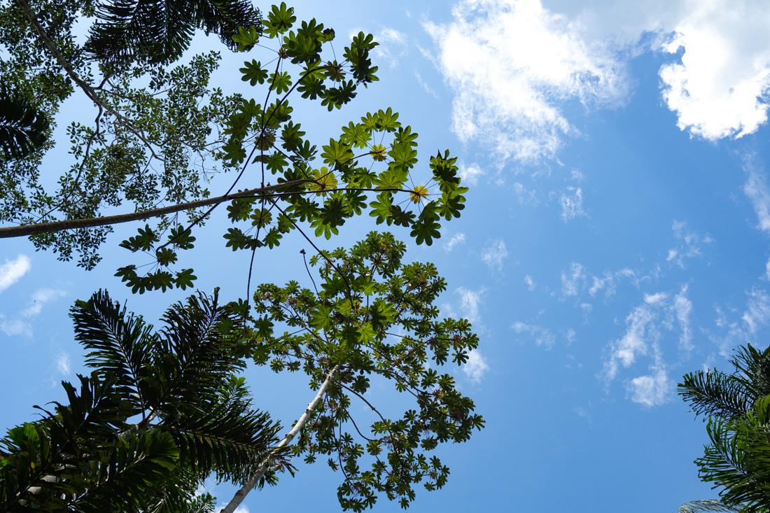 pacaya-samiria-sky.jpg