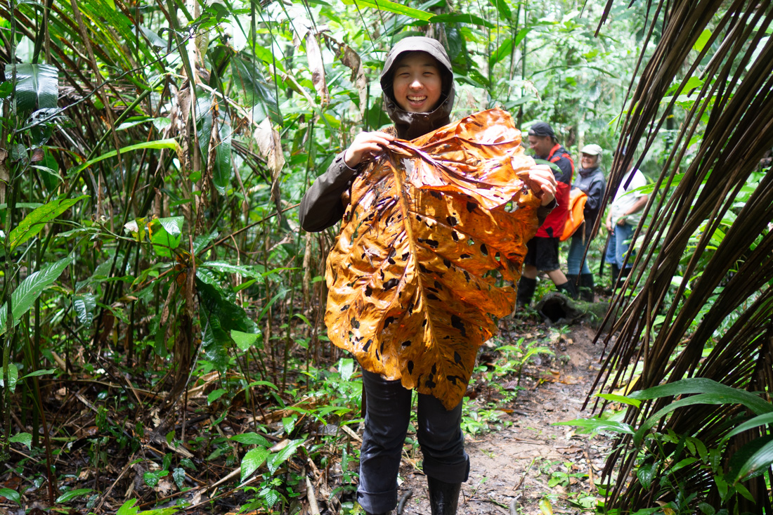 pacaya-samiria-giant-leaf.jpg