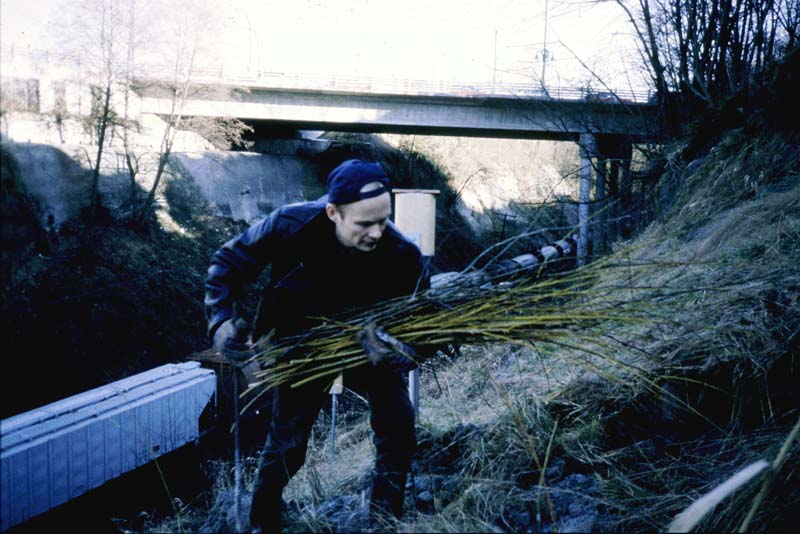 Planting willows in 1997 as part of  Healing the Cut-Bridging the Gap,  image courtesy of Oliver Kellhammer.