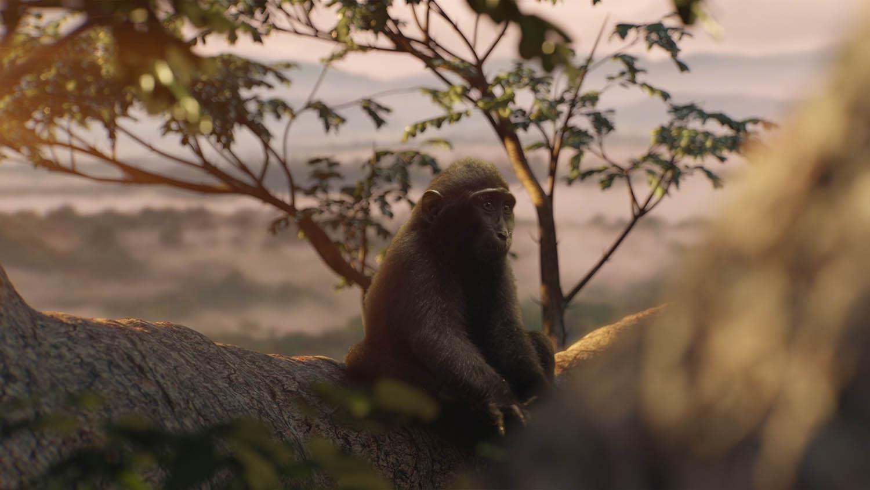 Monkeys_Image_3.jpg