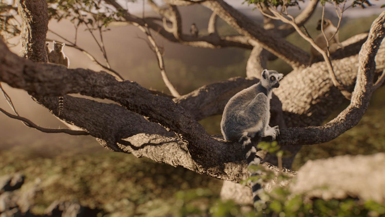 Monkeys_Image_4.jpg