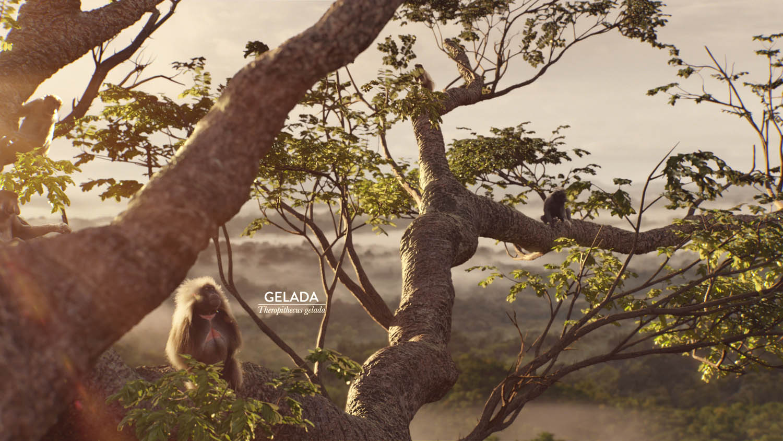 Monkeys_Image_1.jpg