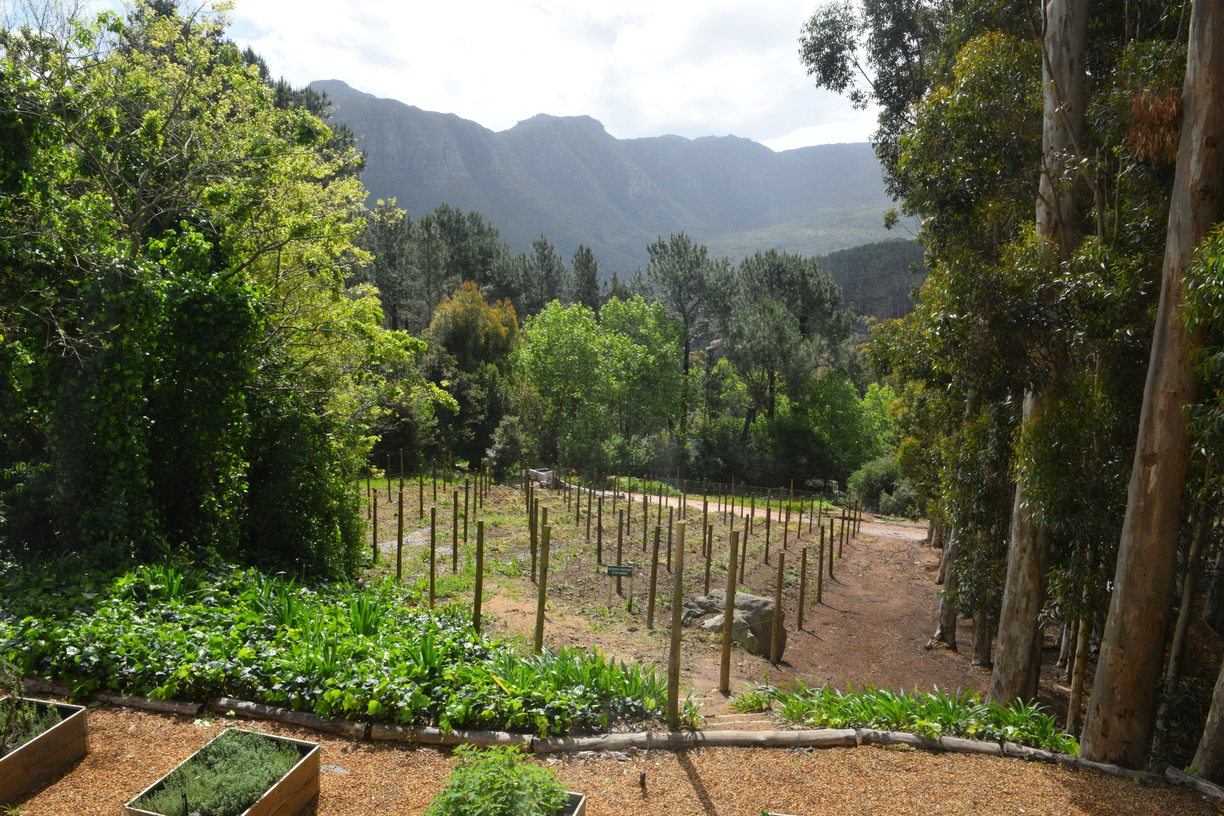 The Silvermist Wine Estate at La Colombe in Constantia, South Africa.