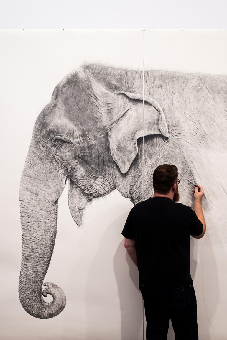 Award-winning Fremantle illustrator Ross Potter works on his life-sized sketch of Perth Zoo's Asian elephant Tricia as part of the Fremantle Arts Centre exhibition Animaze – Amazing Animals for Kids in 2018. Supplied by Ross Potter