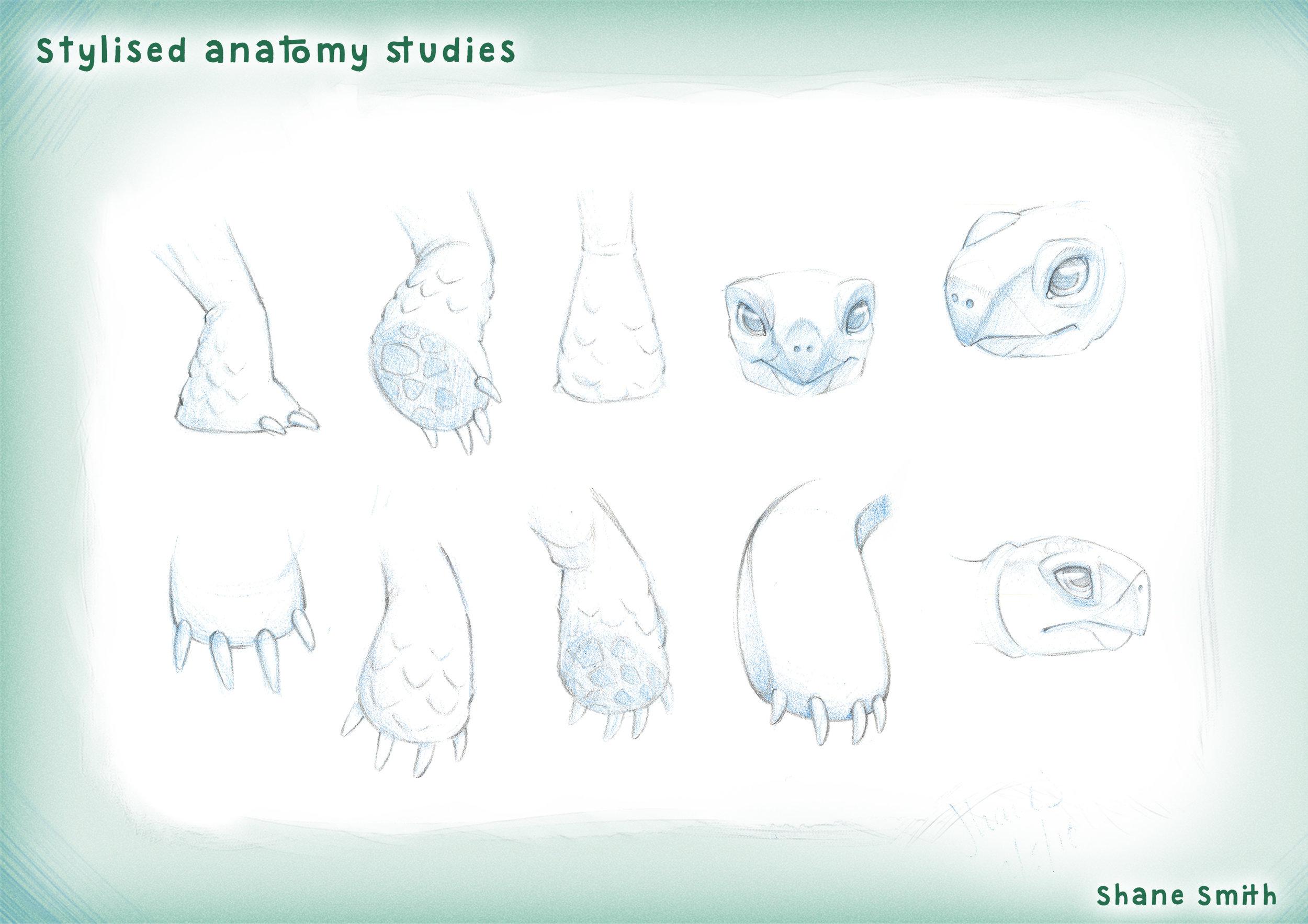1 - Stylised anatomy studies NO PS BRANDING.jpg