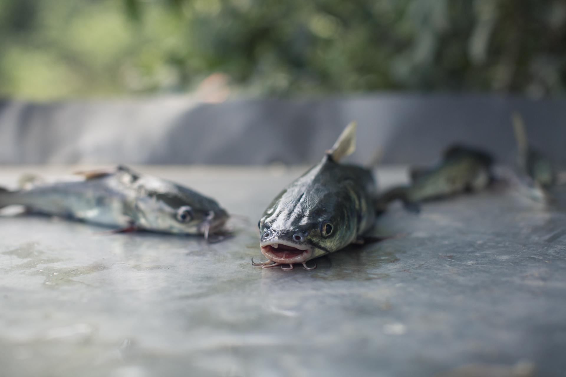 La pesca ilegal es una de las mayores causas por el agotamiento de especies marinas, dañando a ecosistemas marinos y costeros.