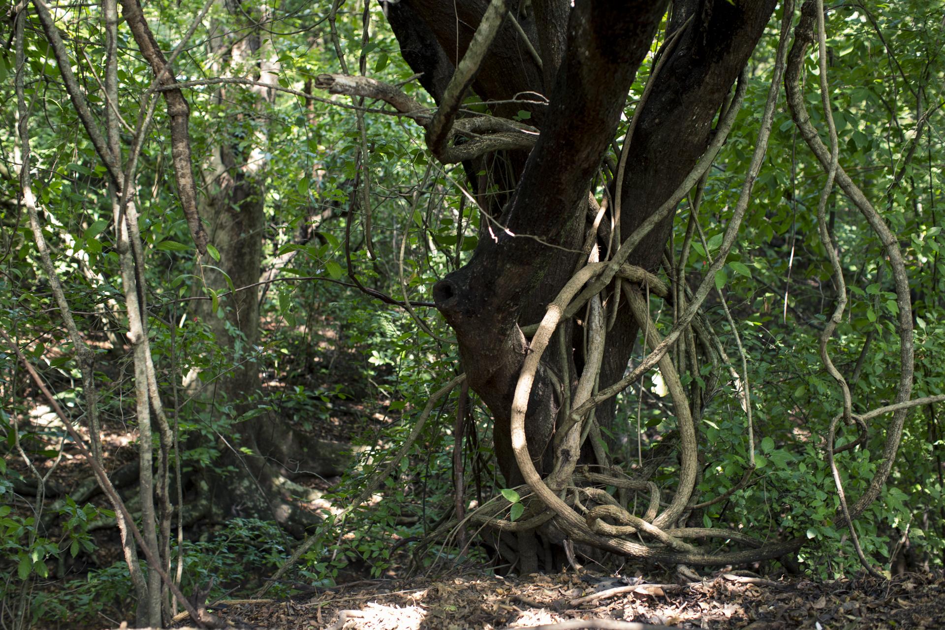 La comunidad de Santa Lucía está en alerta roja por escasez de agua, pero además sus bosques se enfrentan a la tala de árbol impidiéndole a sus habitantes tener sombra del sol guanacasteco.