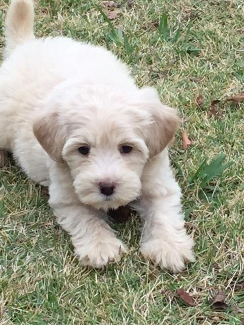 Ozzie at 8 weeks