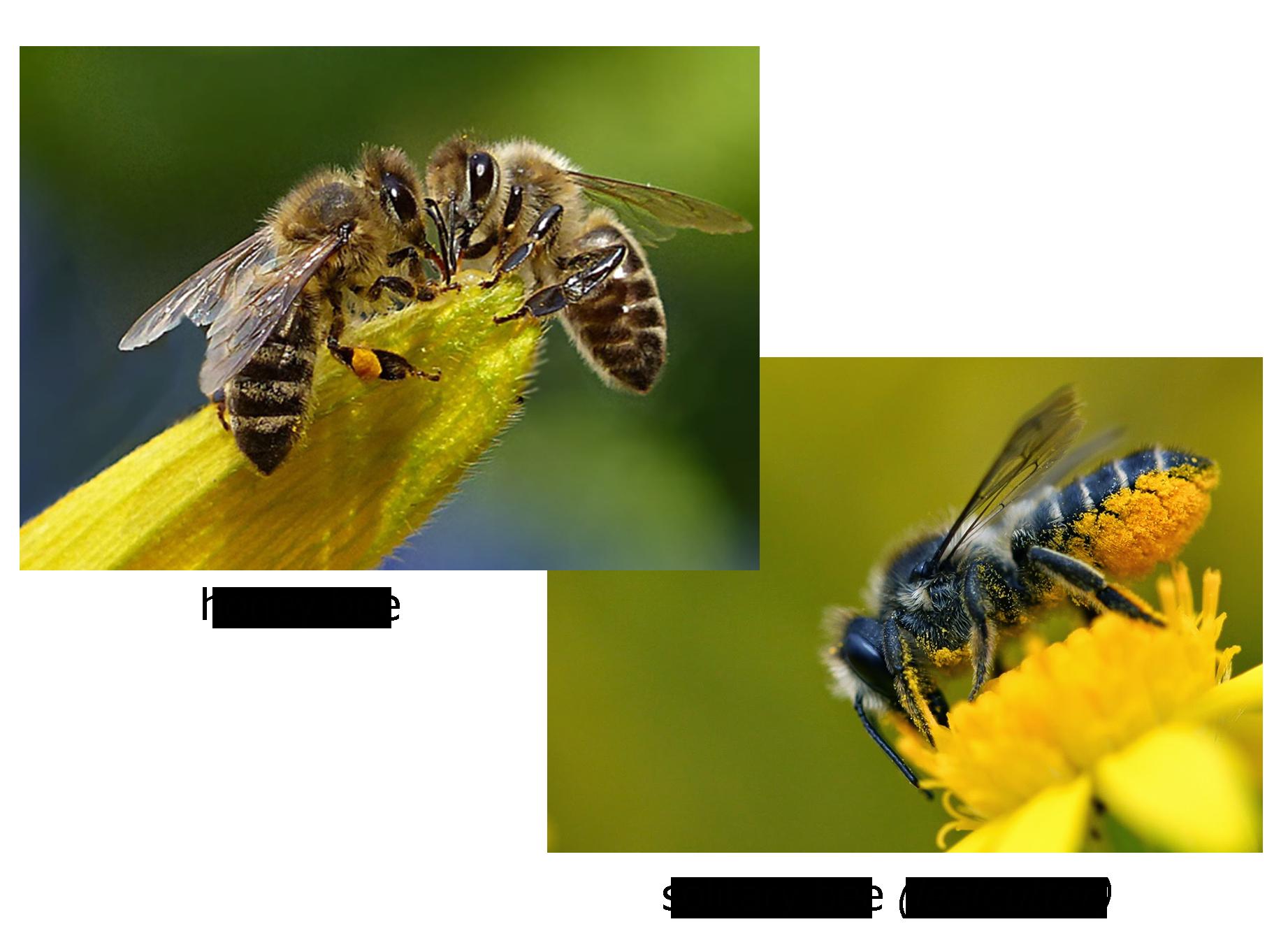 (Photo:  Honey Bee Suite ) and (Photo:  Brigit Strawbridge )