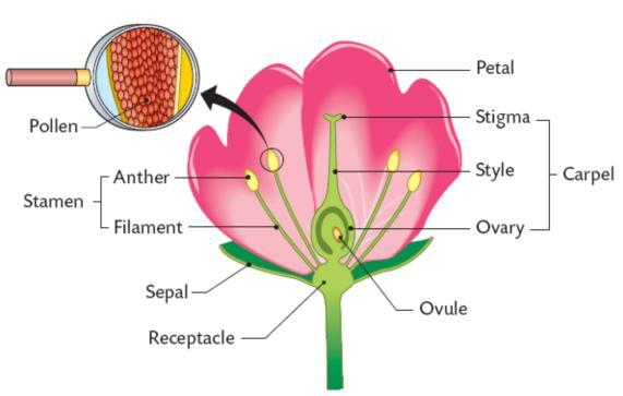 Diagram of a flower (Photo:  Wordpress )