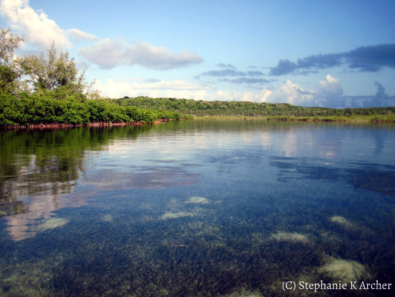 Seagrass_tidalcreek.jpg