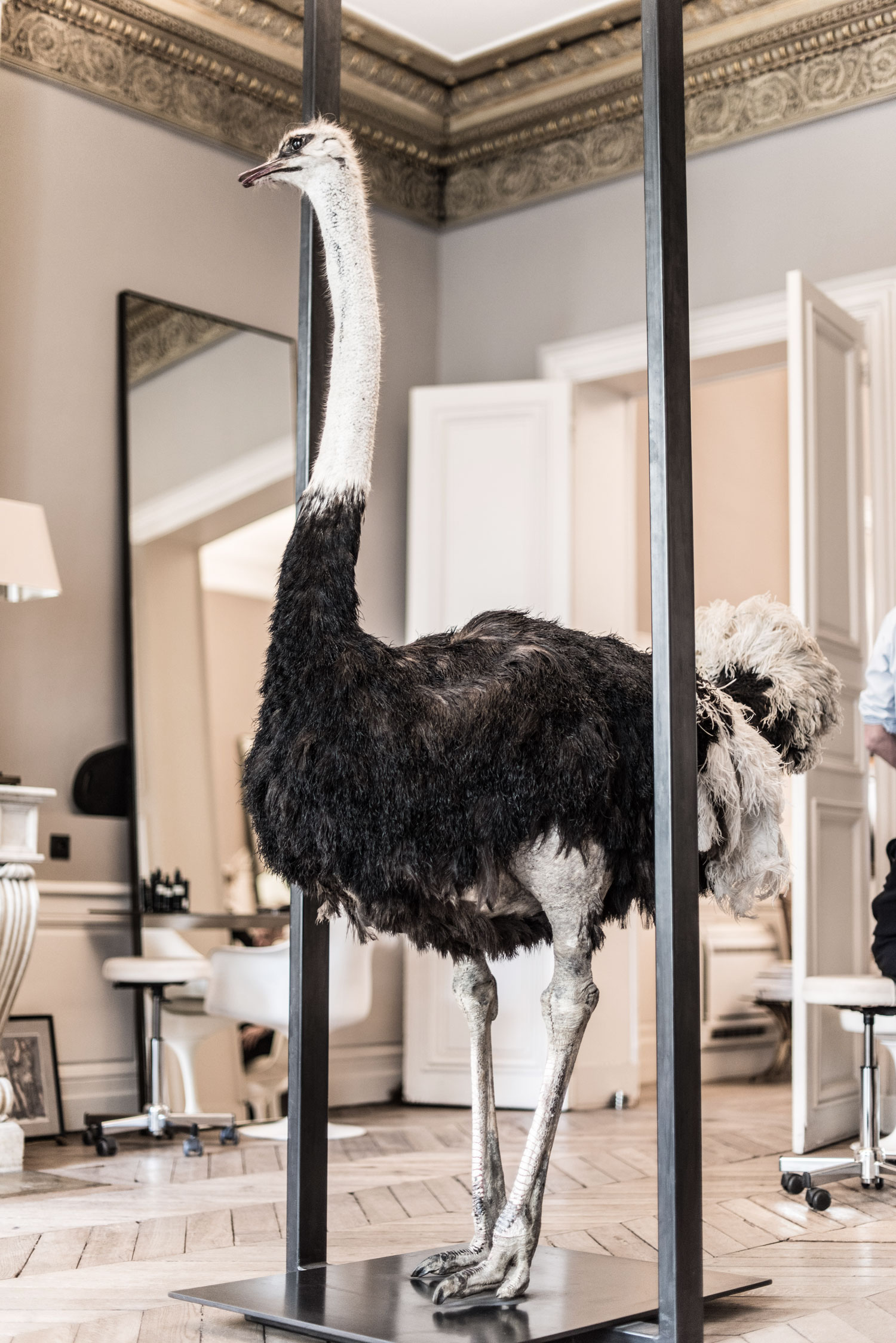 Ostrich at David Mallett salon