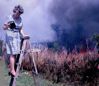 rebecca's great grandmother's Blanche Jackson taking a photo of forest fire on a ladder in her heels and dress in the 1970s.