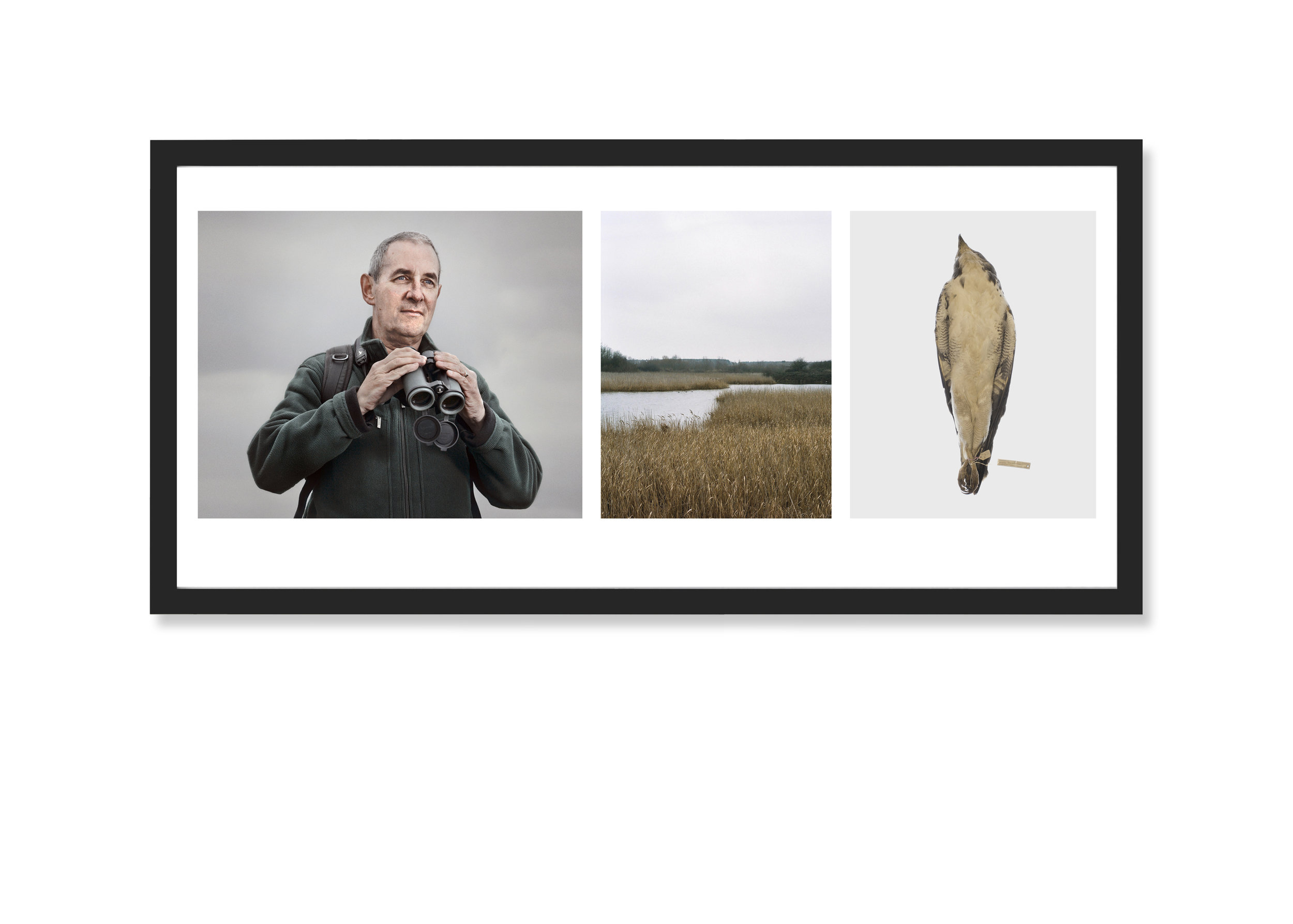 Triptych Image: Accipiter Twitters, 2009-13 Silver Gelatin Prints 32 x 20 inches