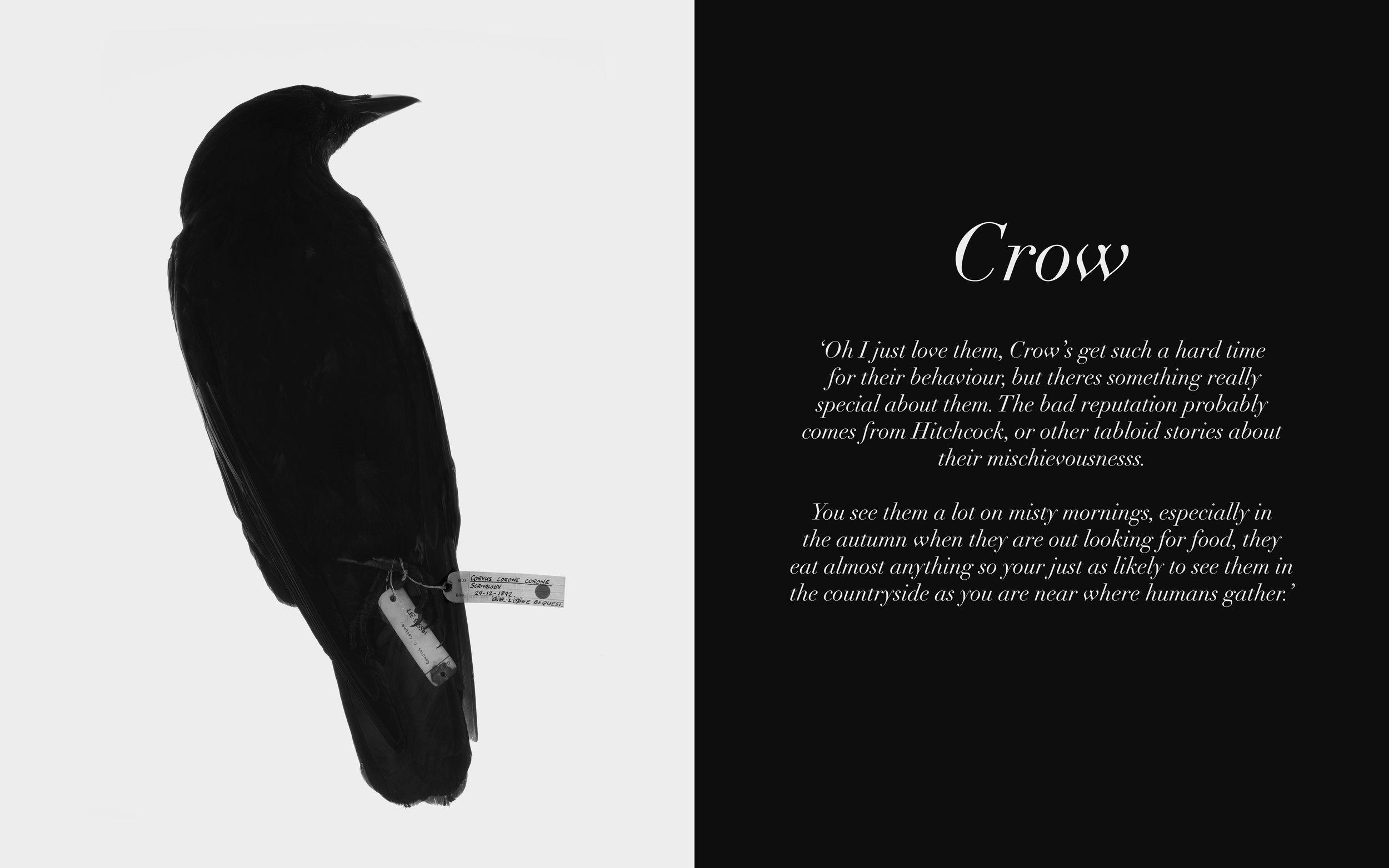 Image: Crow Twitters, 2009-13 Lambda C-Type Print 32 x 20 inches